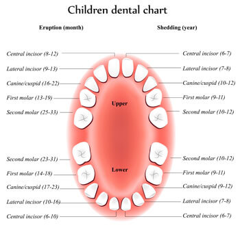 Tooth Eruption Chart - Pediatric Dentist in Las Vegas, NV